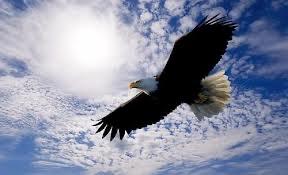 자유.jpg