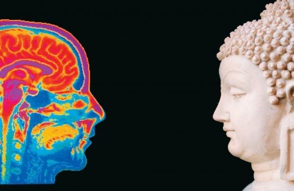 뇌과학.jpg
